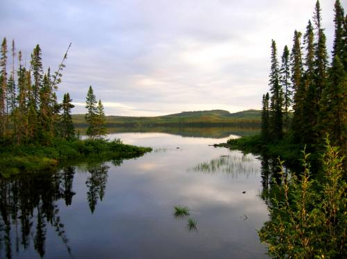 Forêt et lac paisible en été