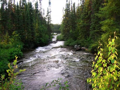 Forêt et rivière agitée en été