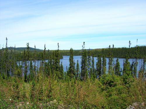 Overview of a lake and the forest arround