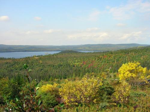 Overview of the forest and colored plants