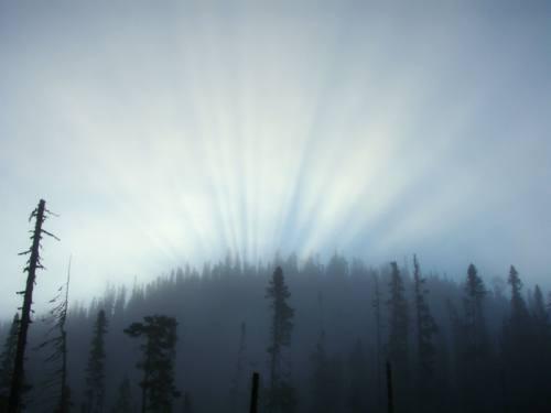 Éclat lumineux au-dessus de la forêt